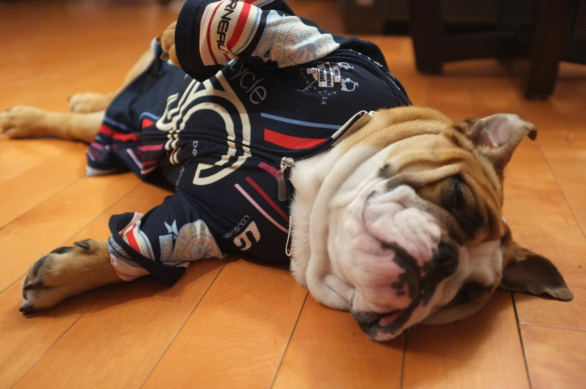 A much younger Winnie the Bulldog, our official team mascot, models the first generation of our team kit featuring the vertical stripes that would dominate our design ethos for the first five seasons of the team's evolution.