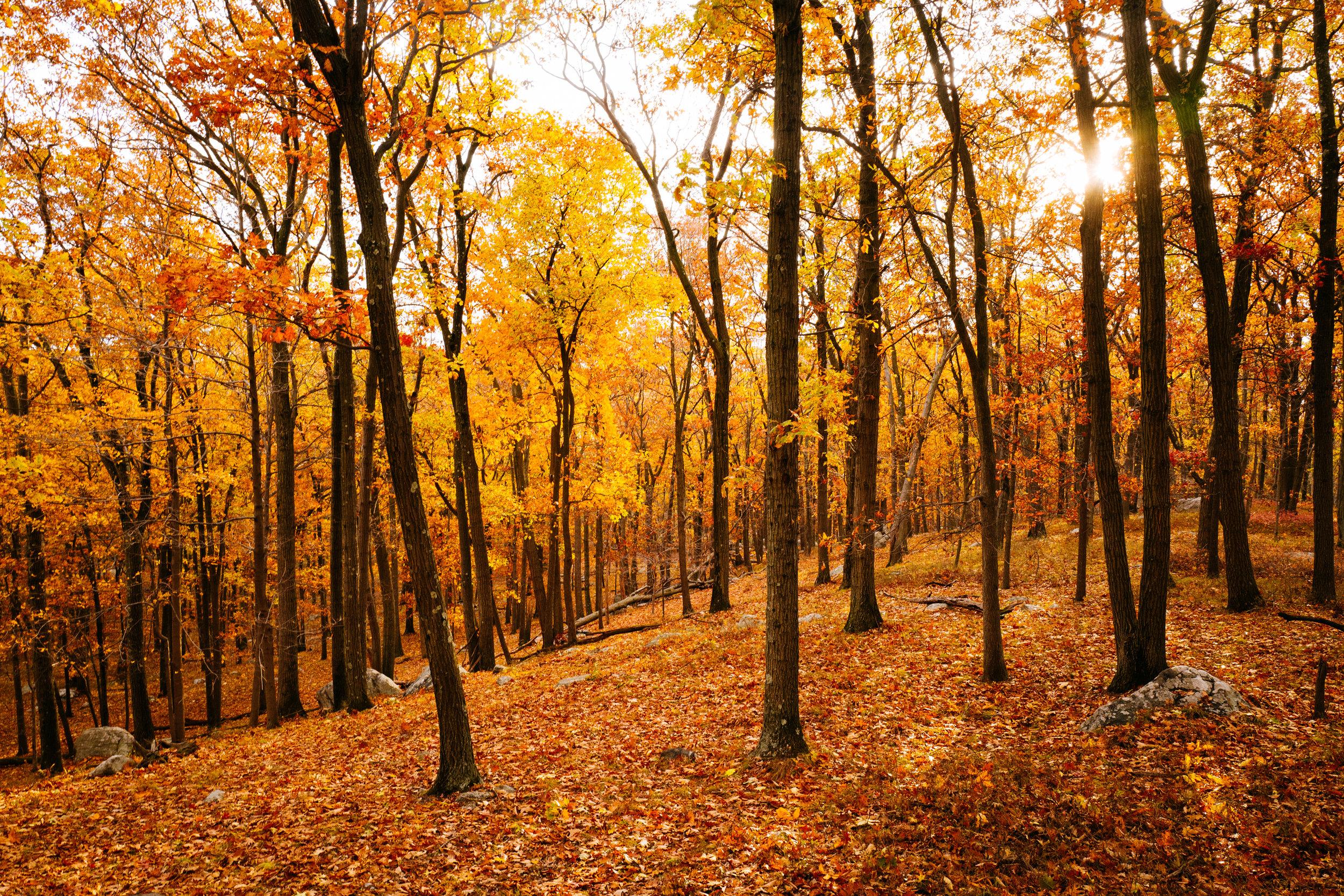 Photo Rhetoric - Fall Foliage-1033.jpg