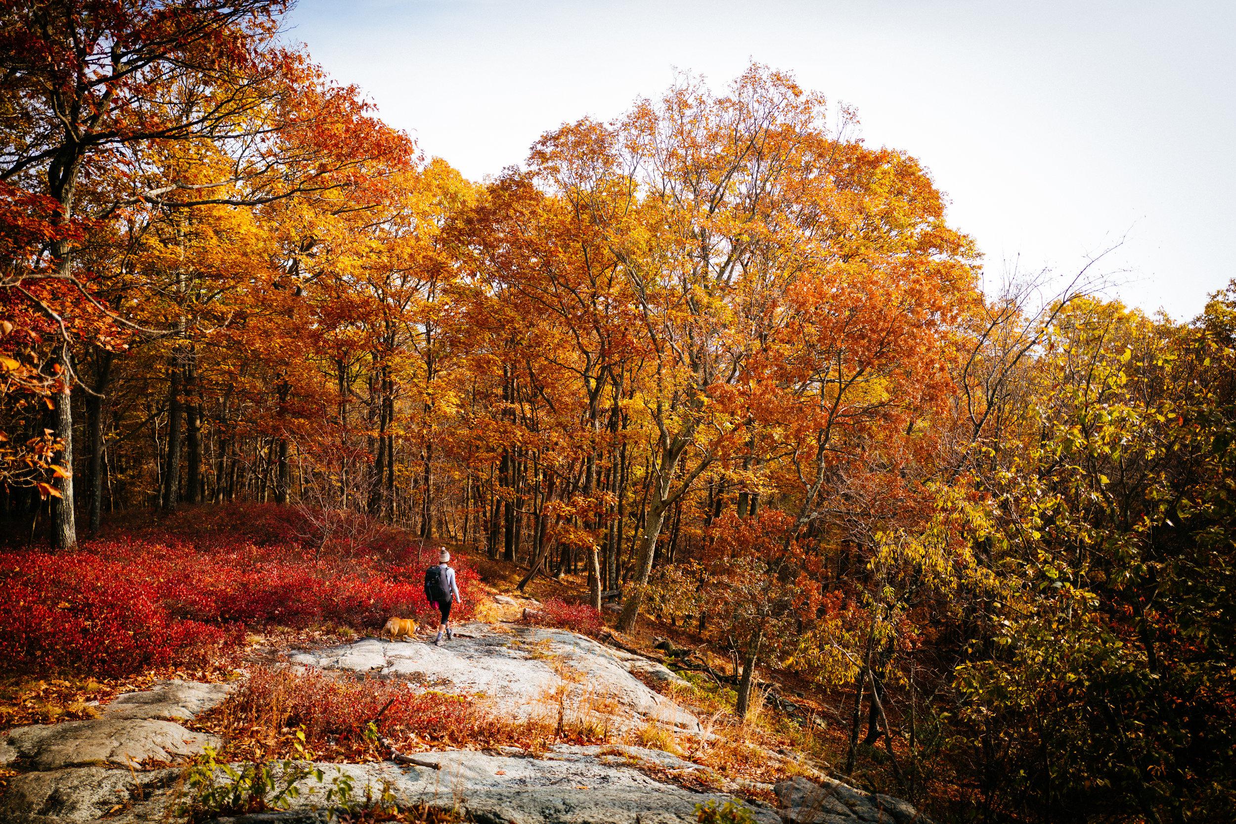 Photo Rhetoric - Fall Foliage-1050.jpg