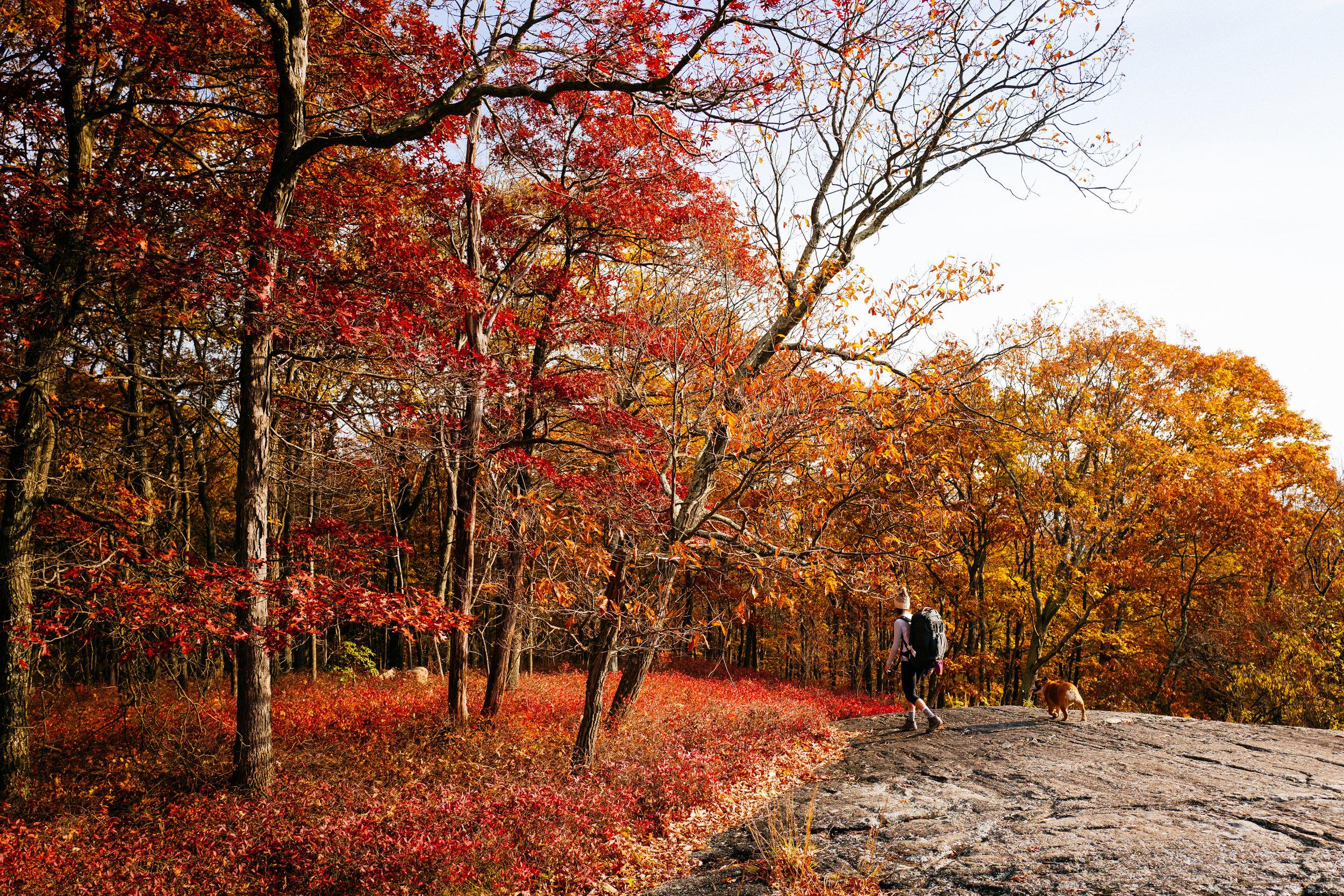 Photo Rhetoric - Fall Foliage-1048.jpg