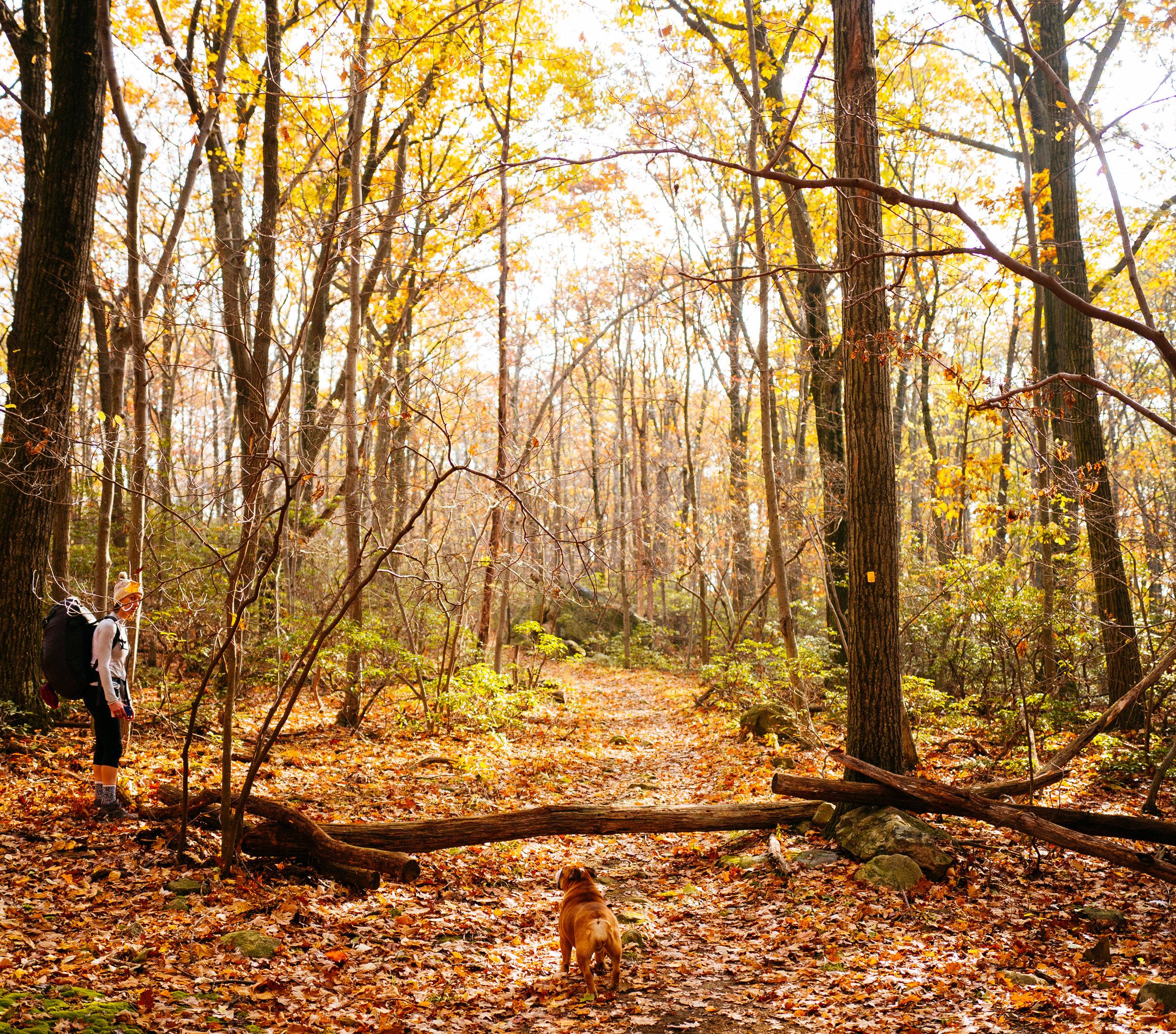 Photo Rhetoric - Fall Foliage-1053.jpg