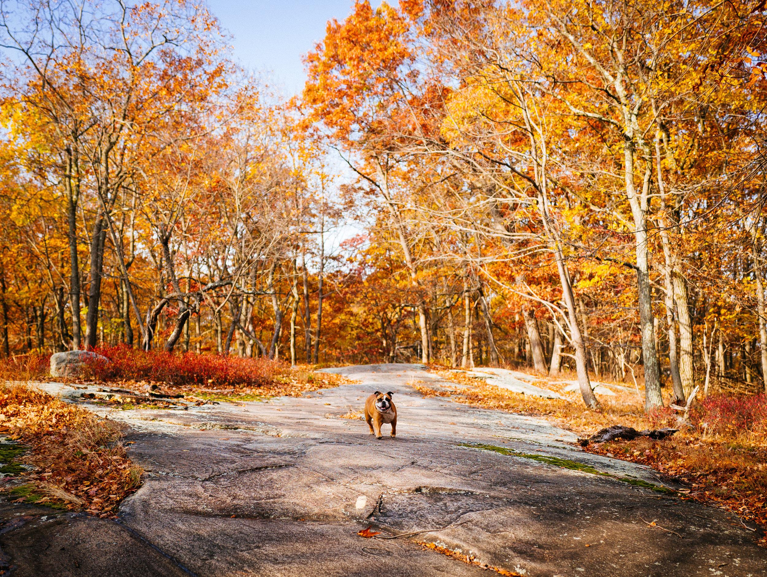 Photo Rhetoric - Fall Foliage-1047.jpg