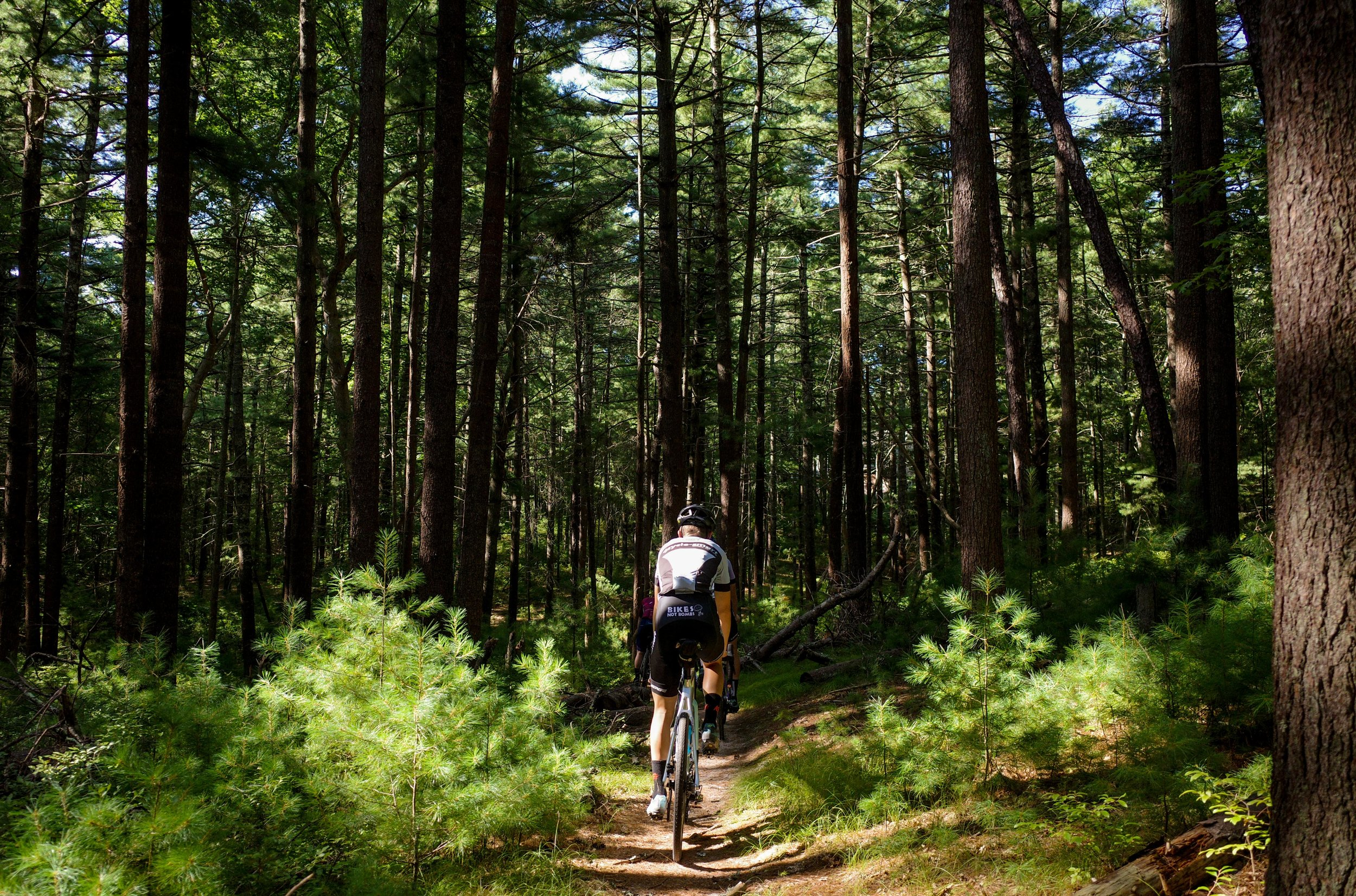 There are actually forests in the Hamptons… Who knew?…
