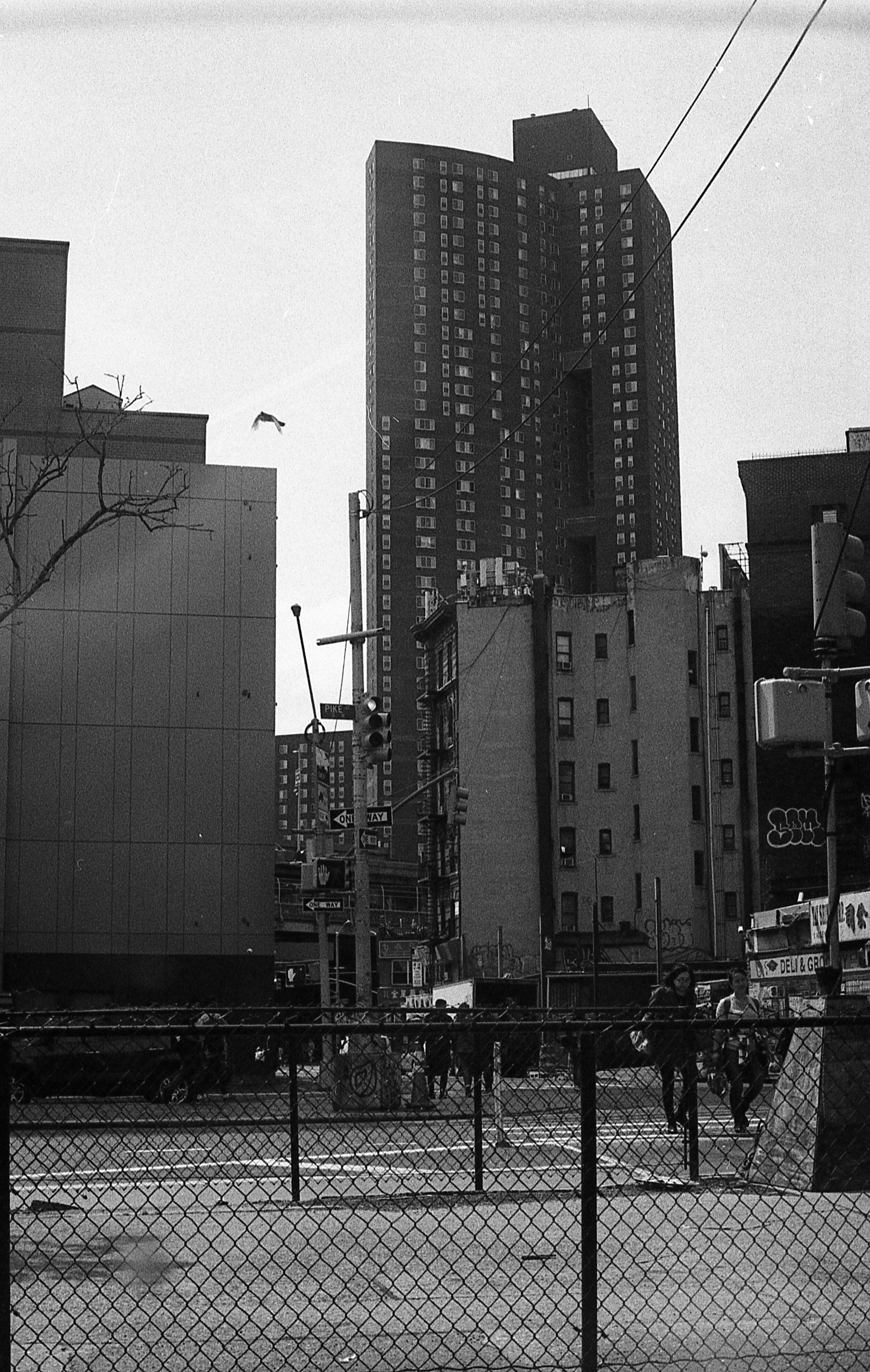 NYTX1816257.jpg