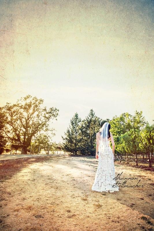 st.francis winery sonoma01