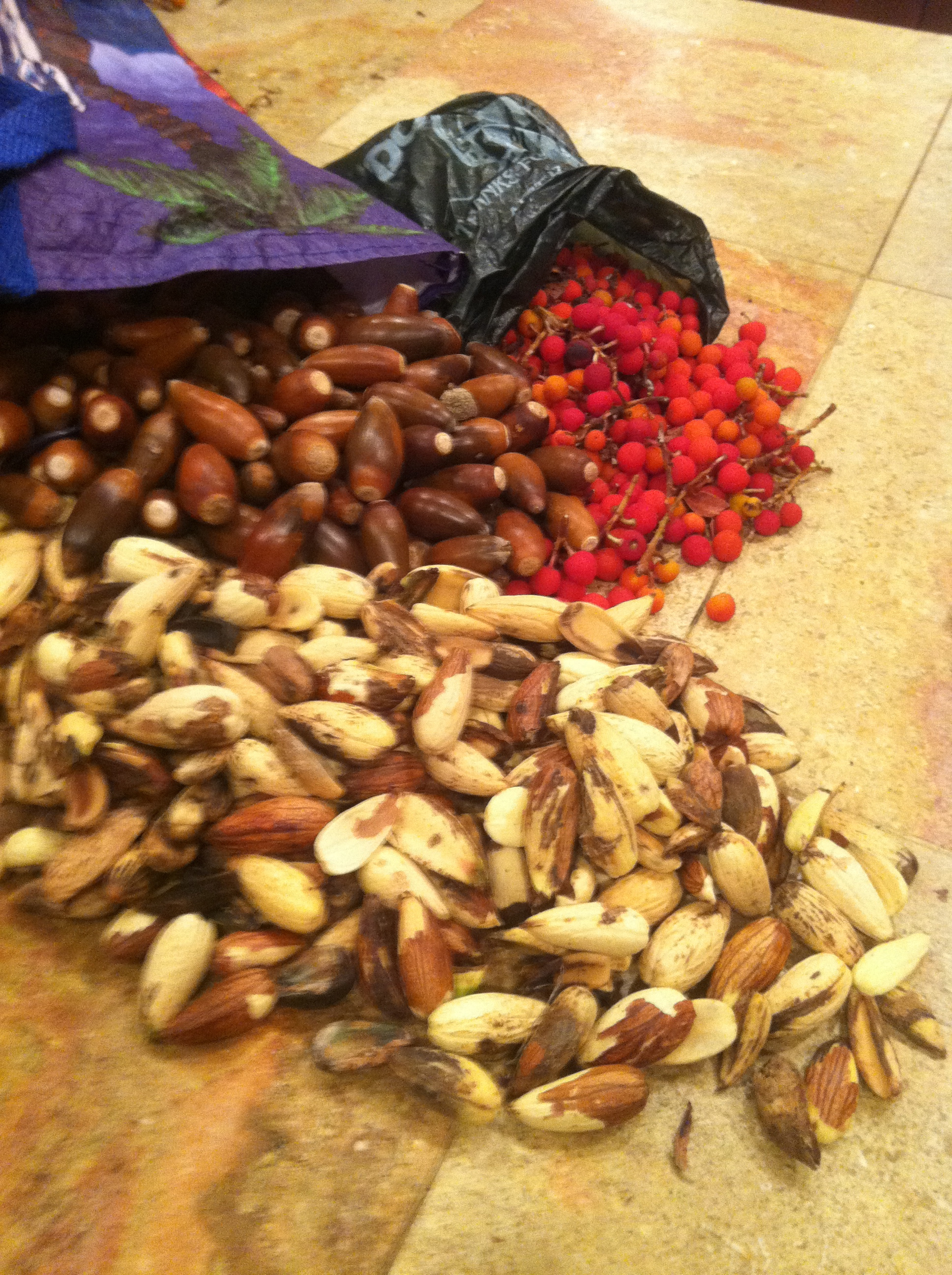 Foraged Acorns and Madrone Berries