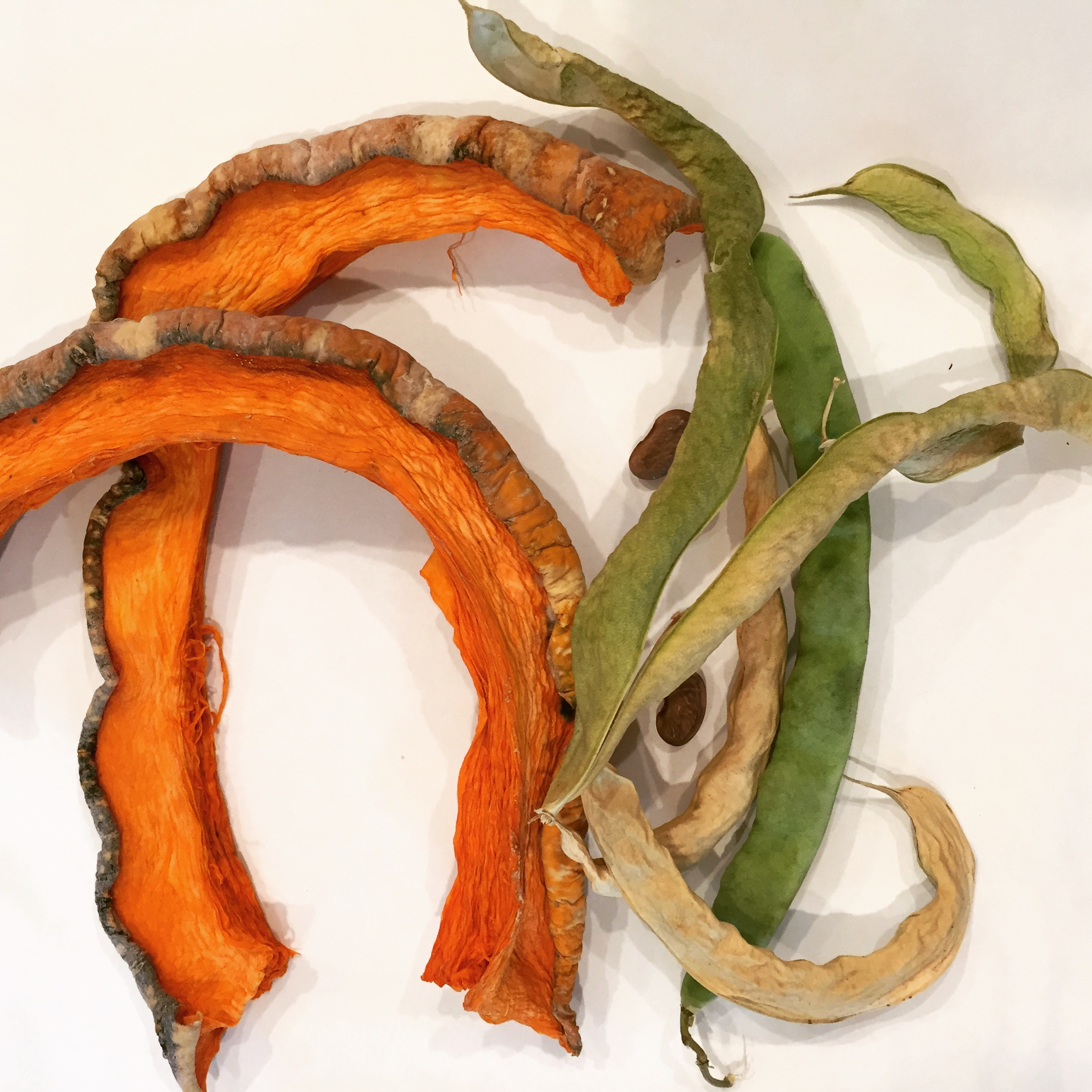 "Dried Squashes and ""Green Britches"" used for Soups and Stews"