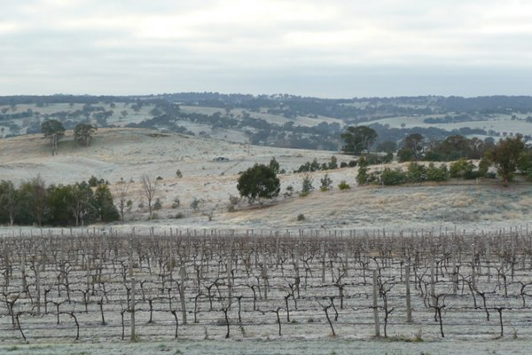 Severe mid-winter frost