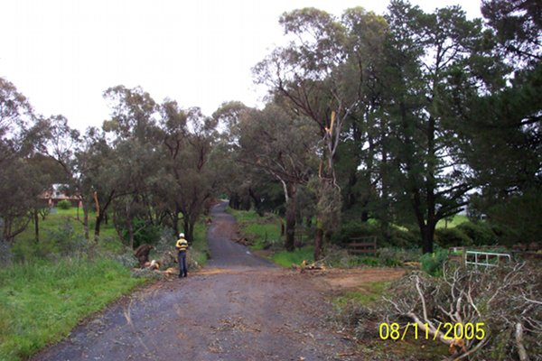 A Chainsaw is sometimes needed to visit Bloodwood