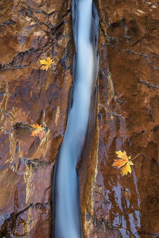 RDP Nature Photography
