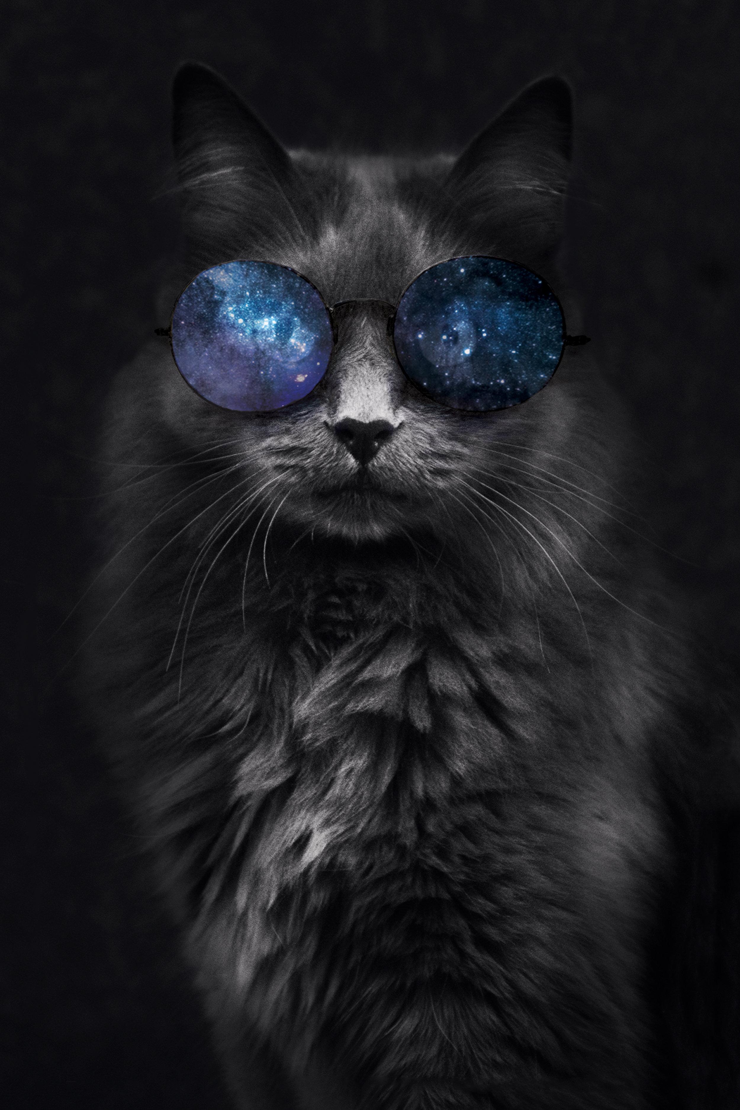 """Space Cat""  Photo composite November 2017"