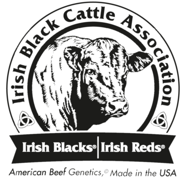 Irish Blacks developed from fifty years of a performance based line breeding program. Today, Irish Blacks are consistent, uniform, and super efficient. The genetic makeup of Irish Blacks is protected and verified by the IRISH BLACK trademark.    Irish Blacks have superior fertility, light birth weights, fast maturity, top feed efficiency, high milk and weaning weights, moderate frames, and dark hides. Irish Blacks possess line-bred genetic strength to dominate when bred to other beef cattle. The result is a well balanced, efficient, superior performing calf.    With the challenges faced by today's cattle producers, Irish Blacks offer unique opportunities. Utilizing Irish Black genetics, a commercial cattle operation can effectively battle constantly rising production costs by improving fertility performance, increasing pregnancy rates,and lowering feed bills. The efficiency of Irish Black cattle is unmatched in the cattle industry. In fact, no other beef breed comes close to the 4.79 average conversion rate proven by a recent pen of half blood Irish Black feedlot steers. The bottom-line financial impact of that kind of feed efficiency for a producer running 100 head of average beef cows; is that same producer can run approximately 120 head of half blood Irish Black females on the same feed those 100 head of average beef cows consume!