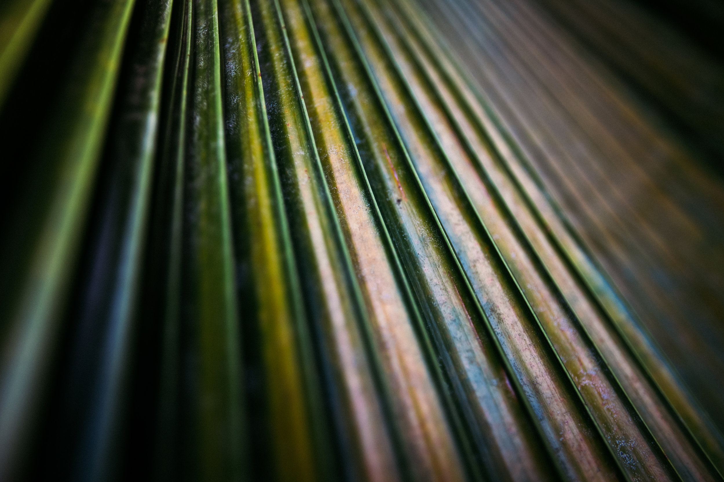 Macro photography Hawaiian palm