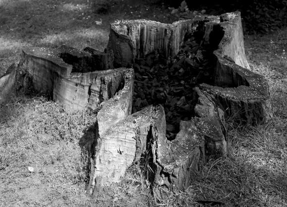 tree-copy-copy-580x419.jpg