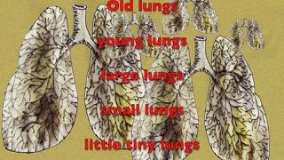 lungs.jpeg