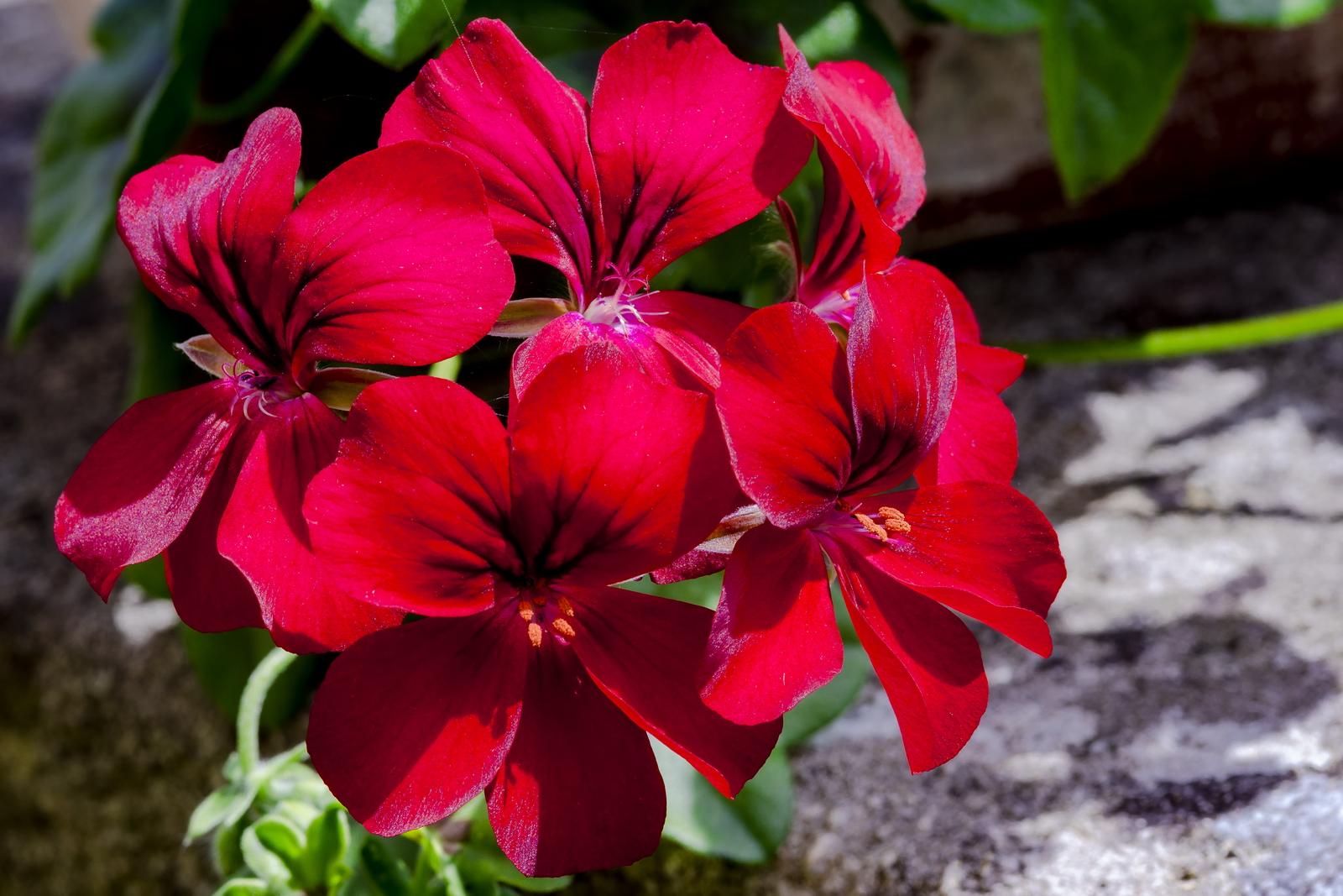 Gorgeous gardens 18.jpg