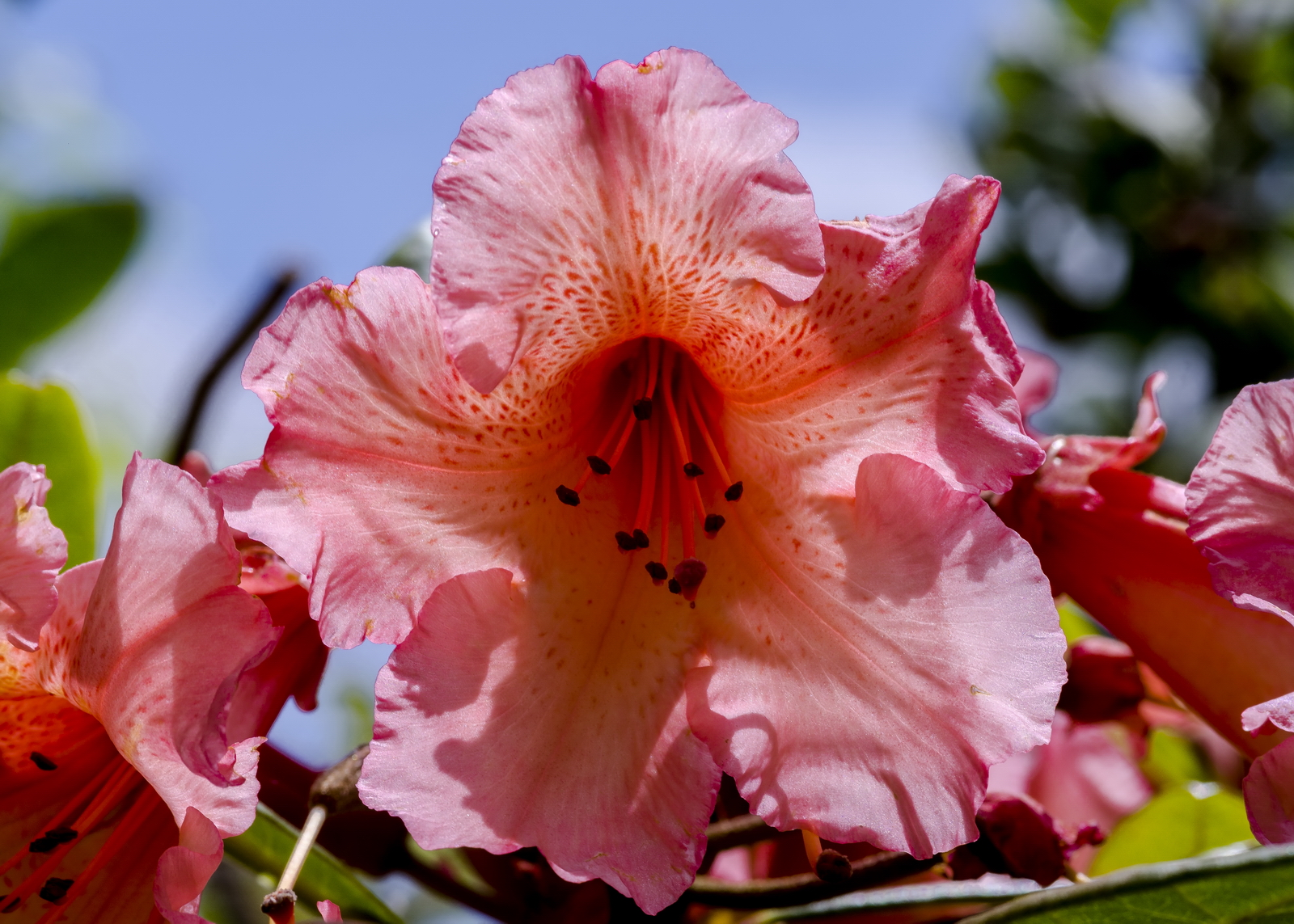 Gorgeous gardens 22.jpg