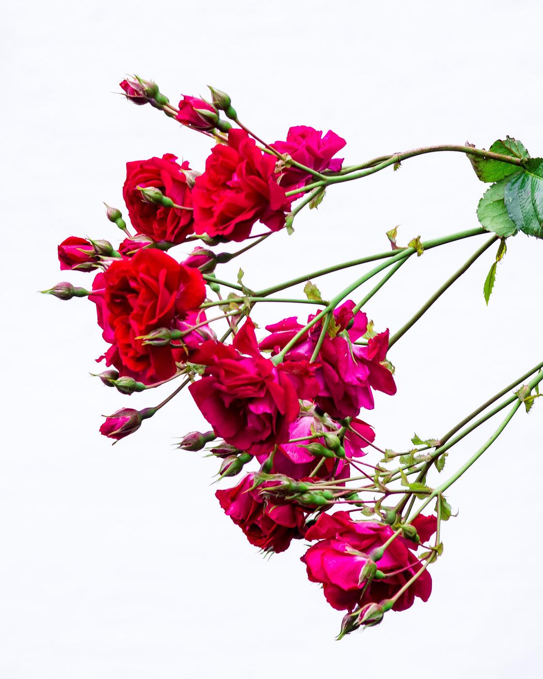 Gorgeous gardens 03.jpg
