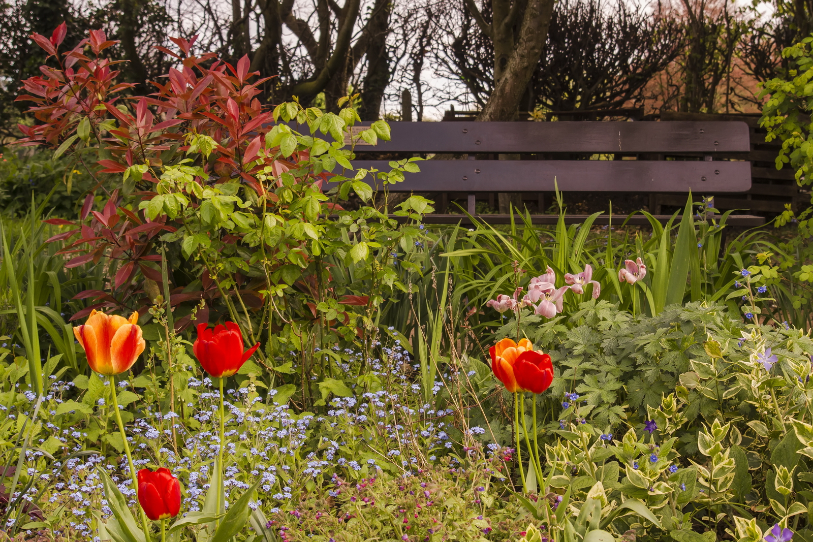 Gorgeous gardens 02.jpg