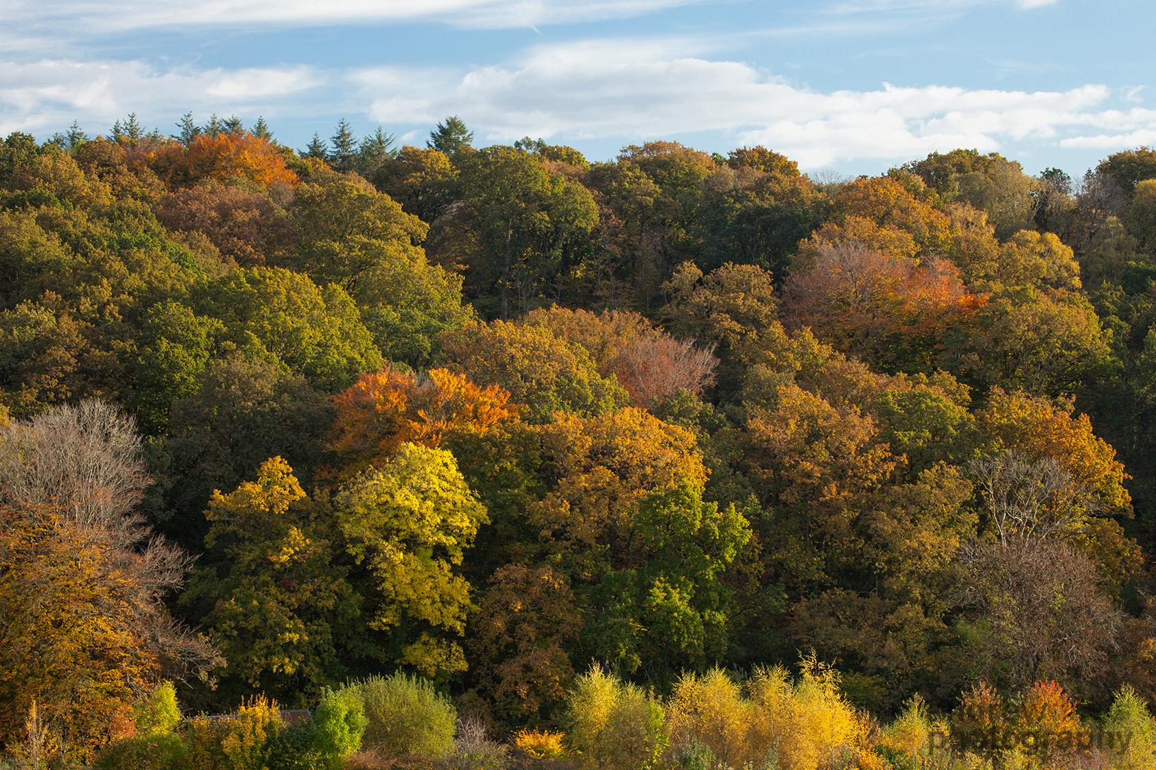 Autumn Colour, Embercombe, Devon