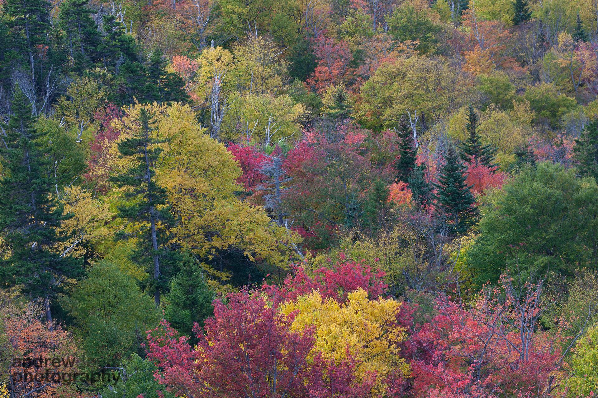 Pinkham Notch, White Mountains, New Hampshire, U.S.A.