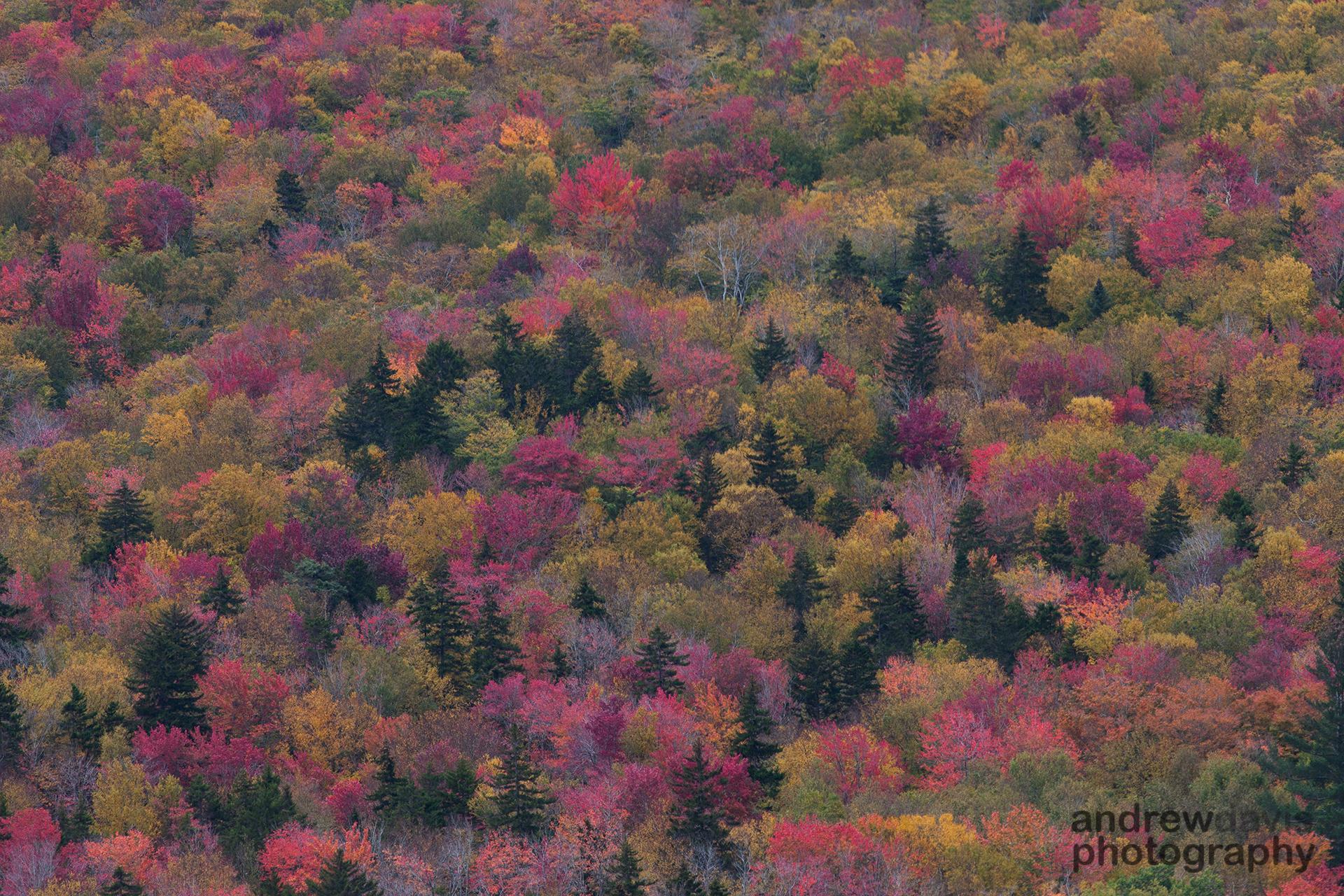 Pinkham Notch, White Mountains, New Hampshire, U.S.A