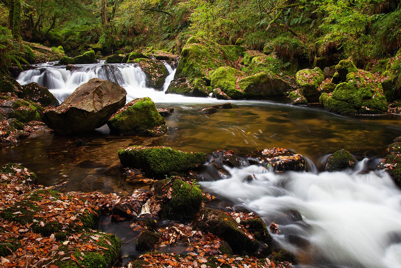Golitha Falls NNR, Bodmin, Cornwall