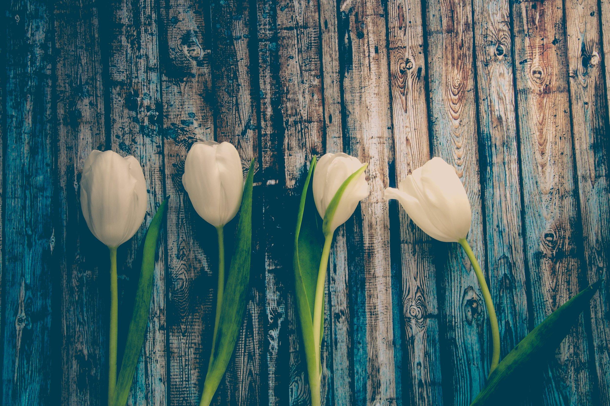 Bryn Mawr Therapy, ptsd, yoga, anxiety, depression