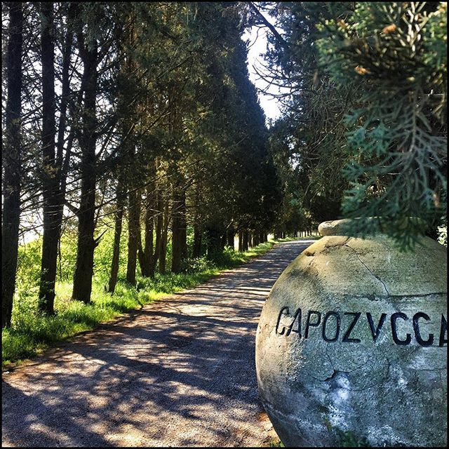 Now I might be getting a bit  lost in translation here, but if 'capo' means head and 'zucca' means pumpkin, them one of my neighbors who I have yet to meet and who lives down this lovely pine-tree-lined lane, is Mr/Mrs Pumpkin-Head.  I should be able to spot him/her...