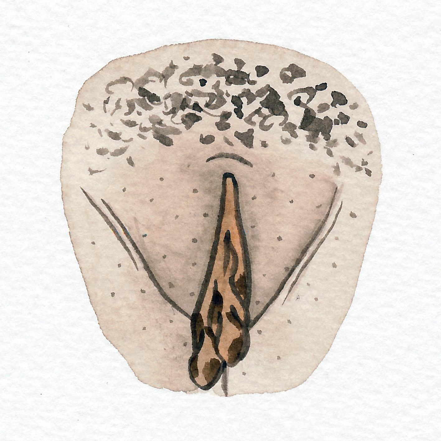 Vulva Gallery Brown133.jpg