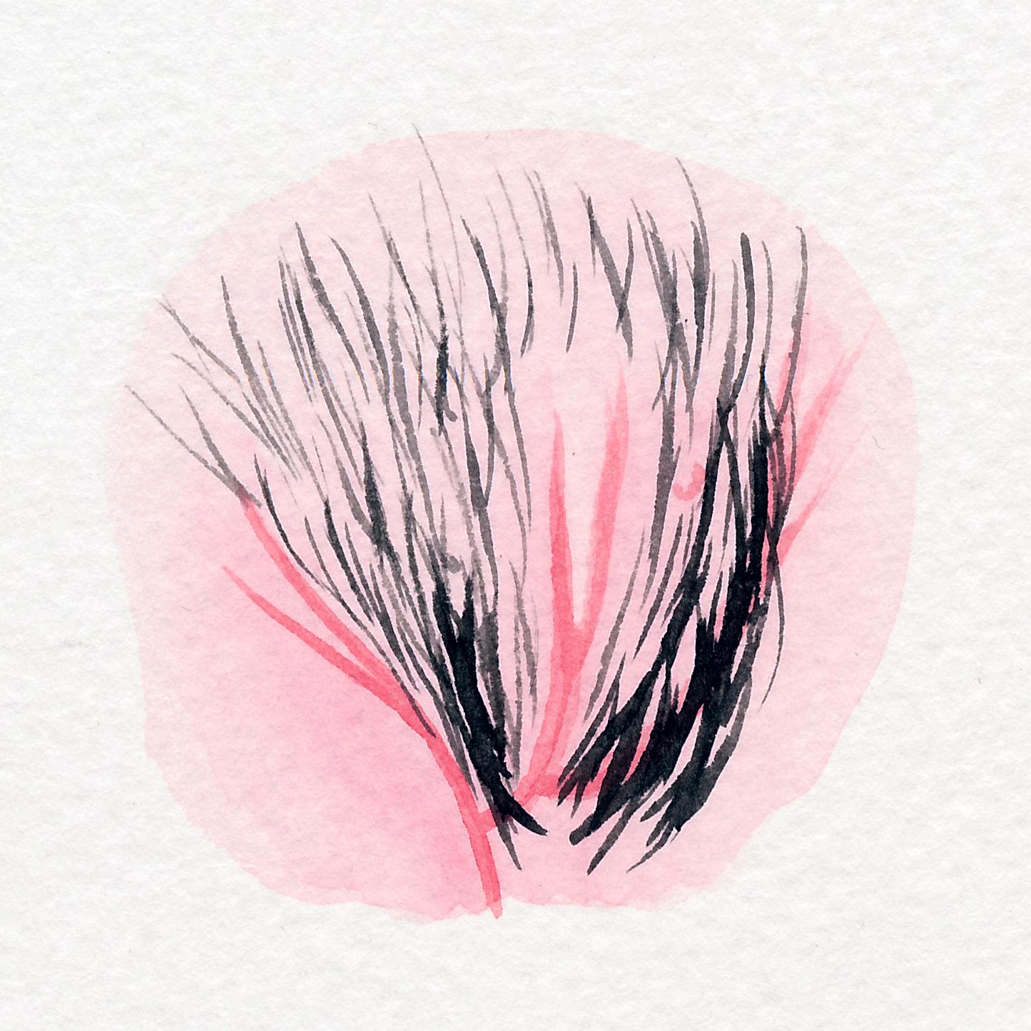 The Vulva Gallery - Vulva Portrait #47.jpg