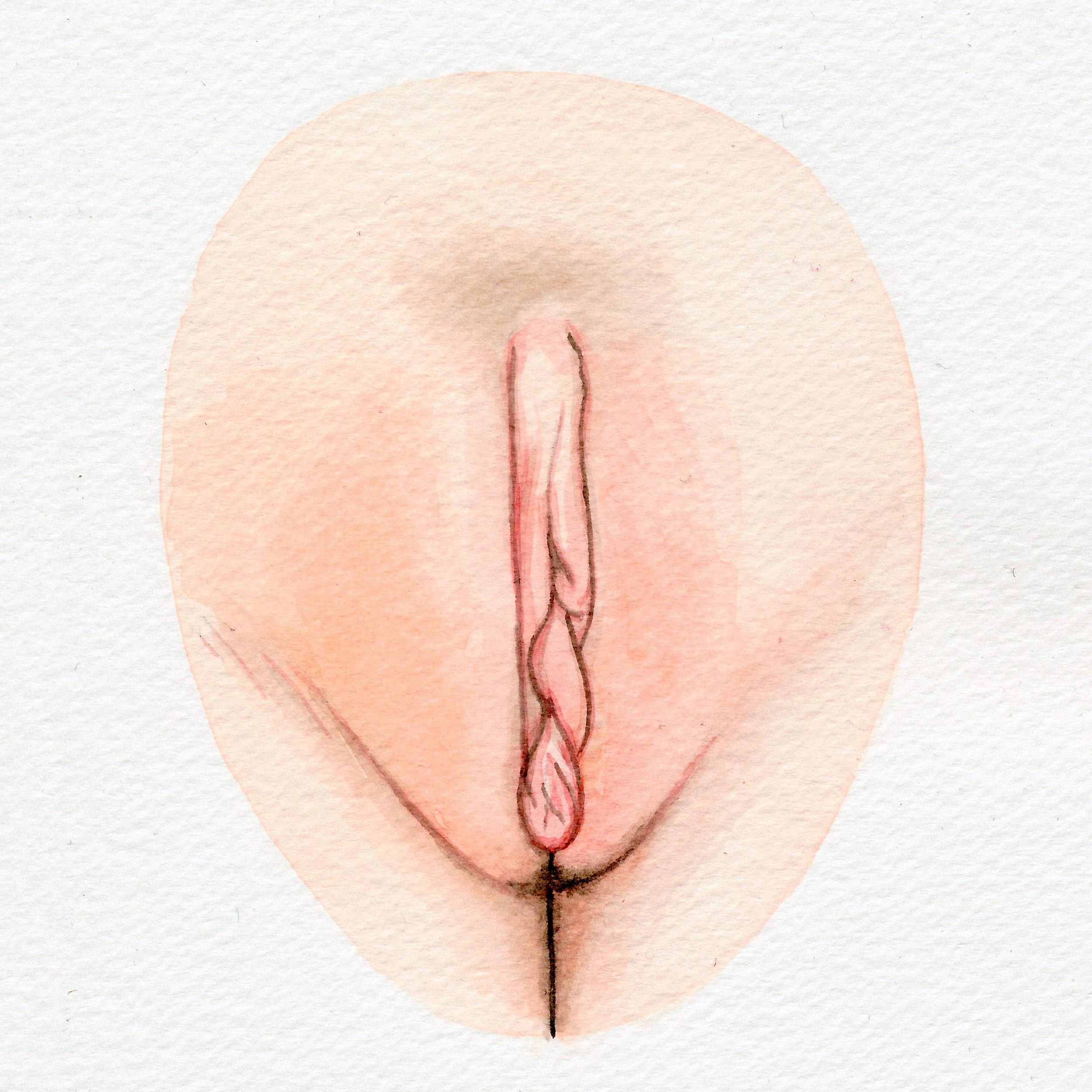 The Vulva Gallery - Vulva Portrait #116 (s).jpg