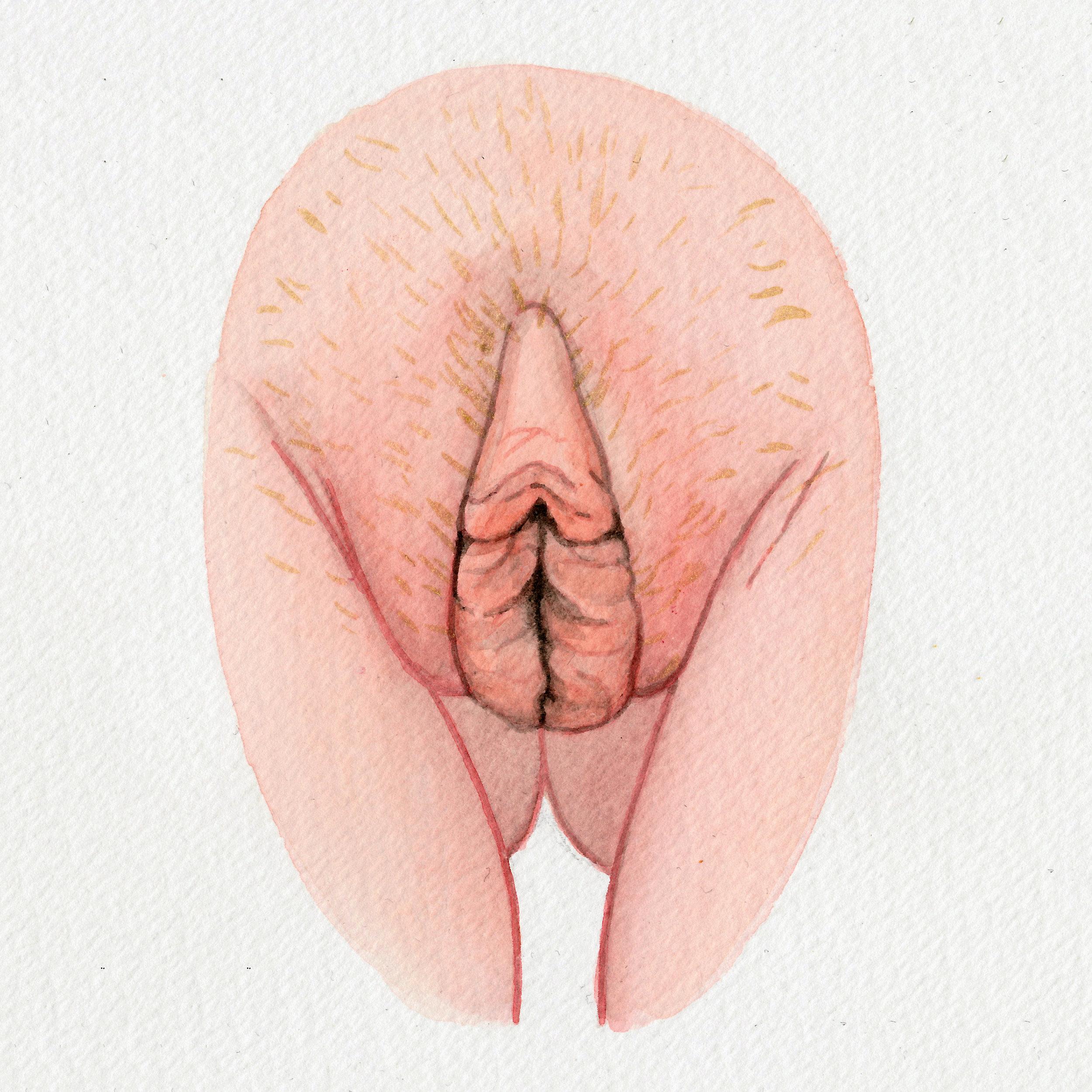 The Vulva Gallery - Vulva Portrait #117 (s).jpg