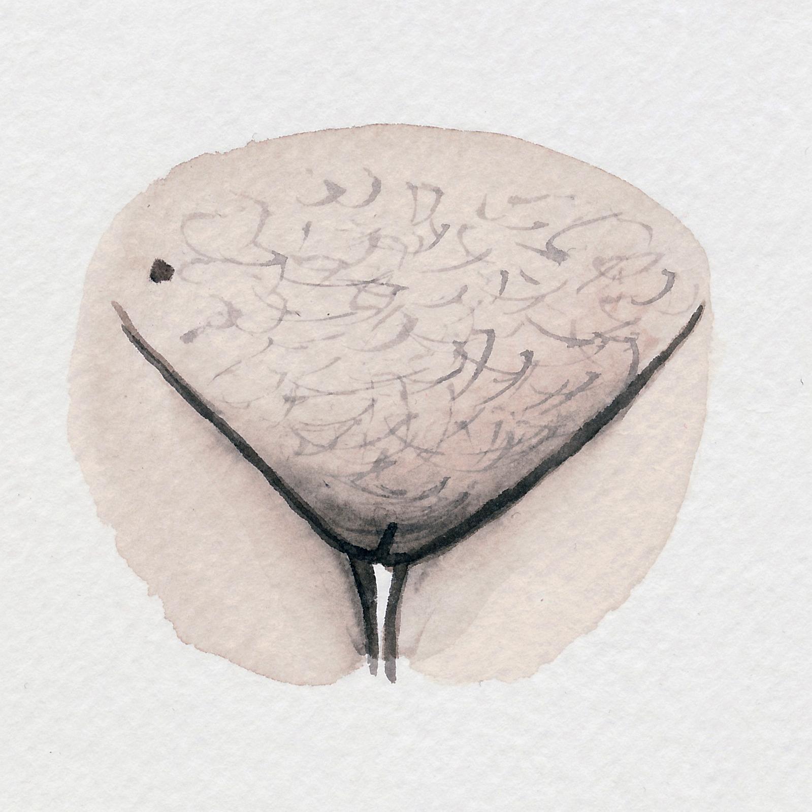 The Vulva Gallery - Vulva Portrait #99.jpg