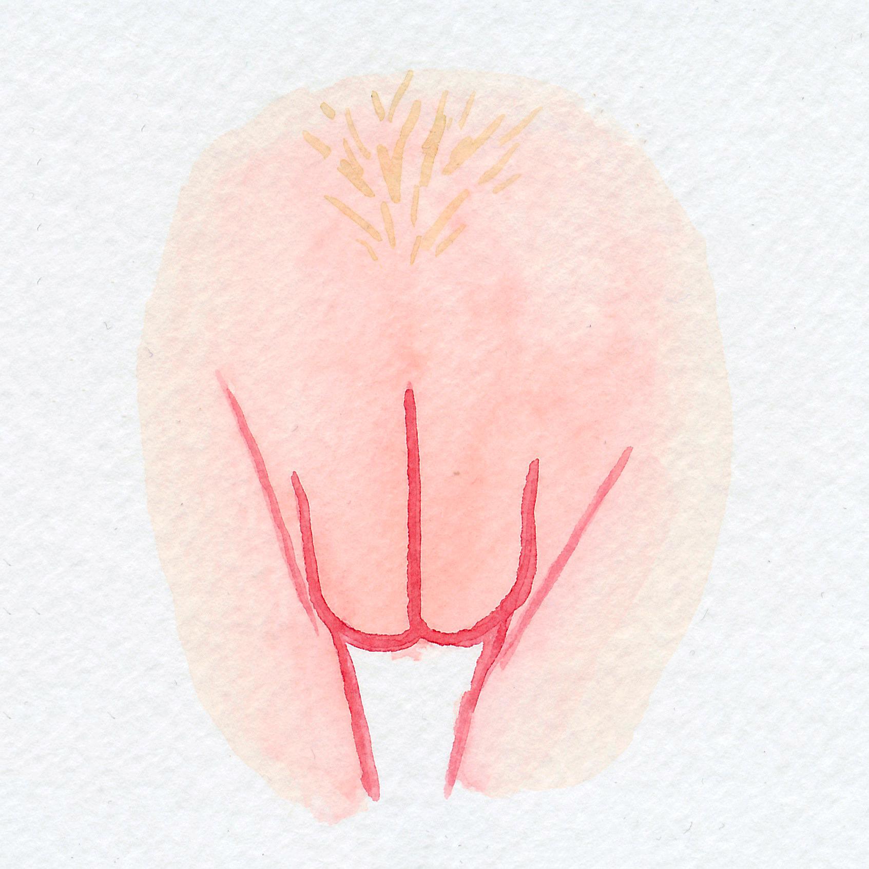 The Vulva Gallery - Vulva Portrait #103.jpg