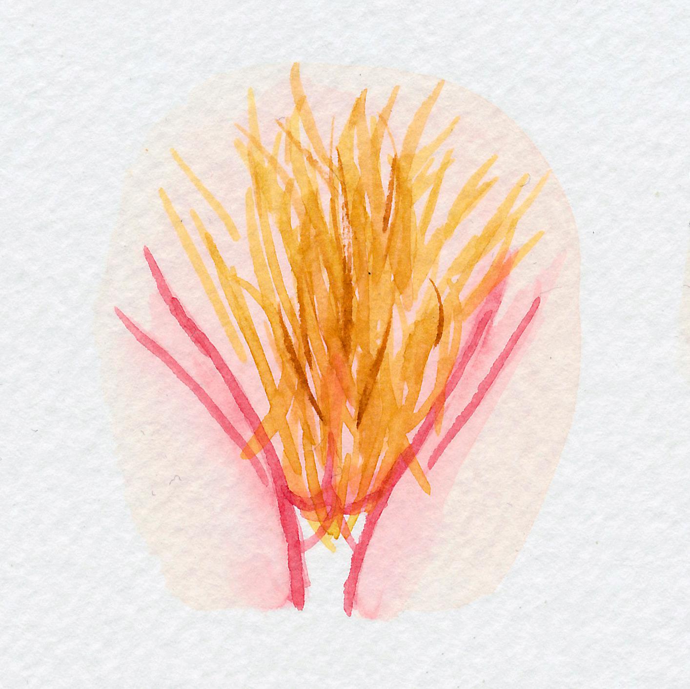 The Vulva Gallery - Vulva Portrait #108.jpg