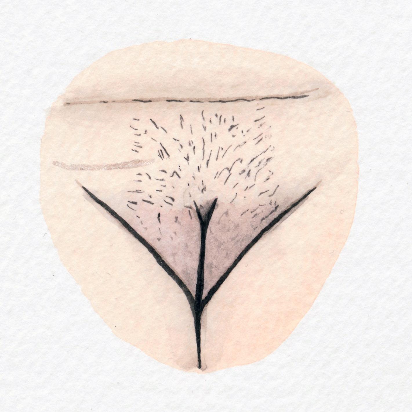 The Vulva Gallery - Vulva Portrait #148.jpg