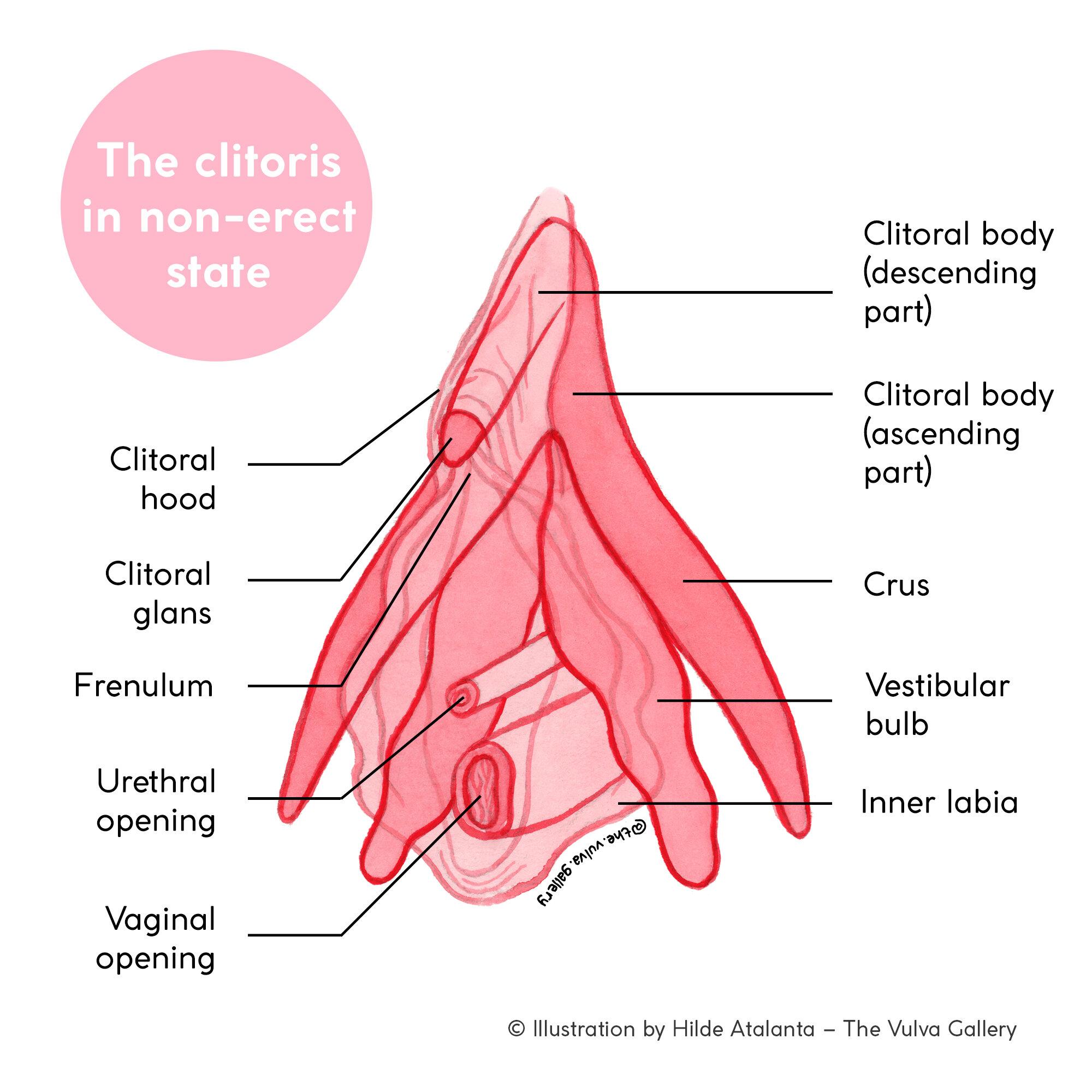 anus tailbone image Anatomy located