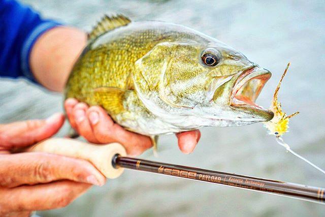 The @sageflyfish Payload delivers. | #smallmouthseason #freshcoastangling | . . . . #sageflyfish #rioproducts #maketheconnection #smalliesonthefly #flyfishing #smallmouth