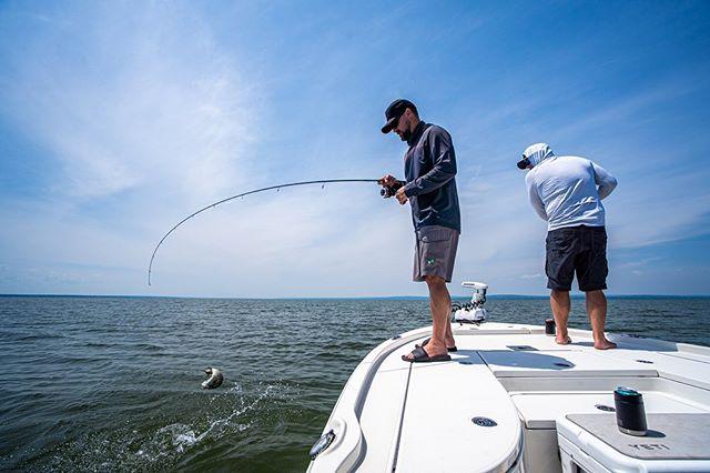 Been a 🔥🔥🔥 week of fishing. | #smallmouthseason #freshcoastangling | . . . . #dropshot #lighttackle #smallmouthbass #smallmouthfishing #bassfishing
