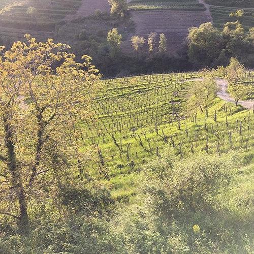 Stekar Vineyards