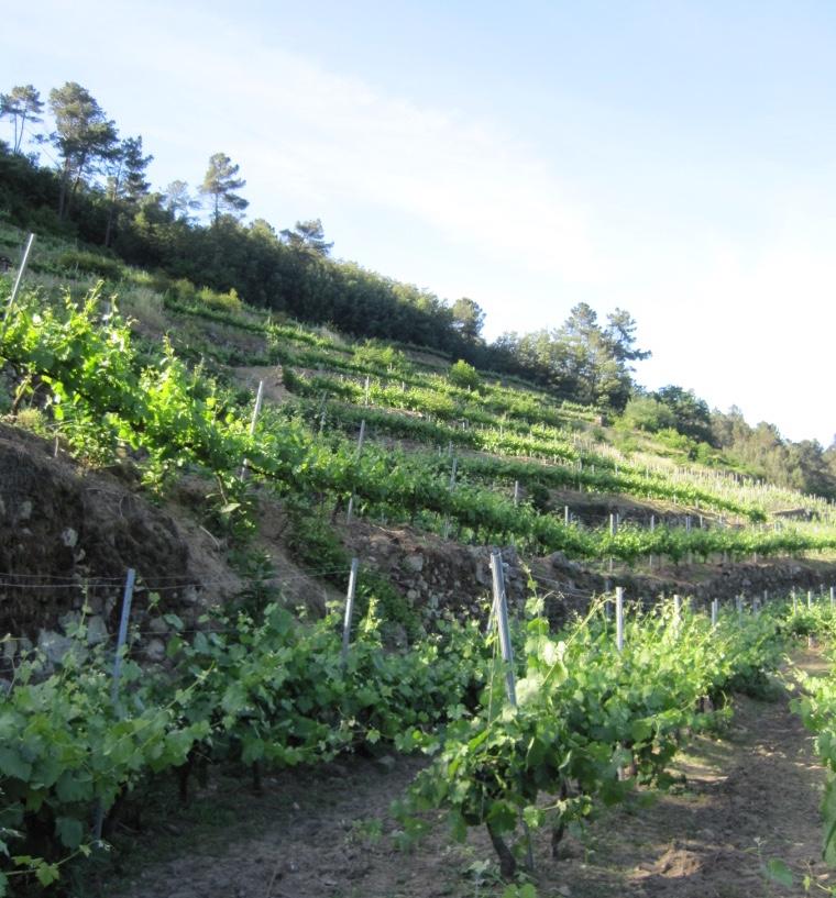 Ailala Vines 2.jpg