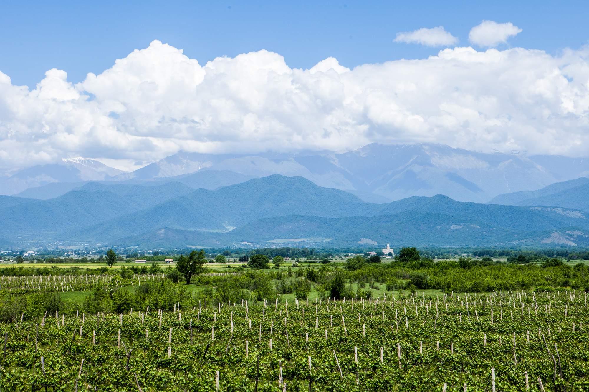 Kakheti Vineyards