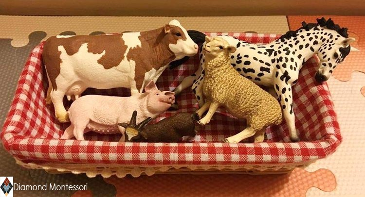 The quality of Schleich animals makes them a favourite of classrooms and homeschools all over. The detail on them is astonishing.
