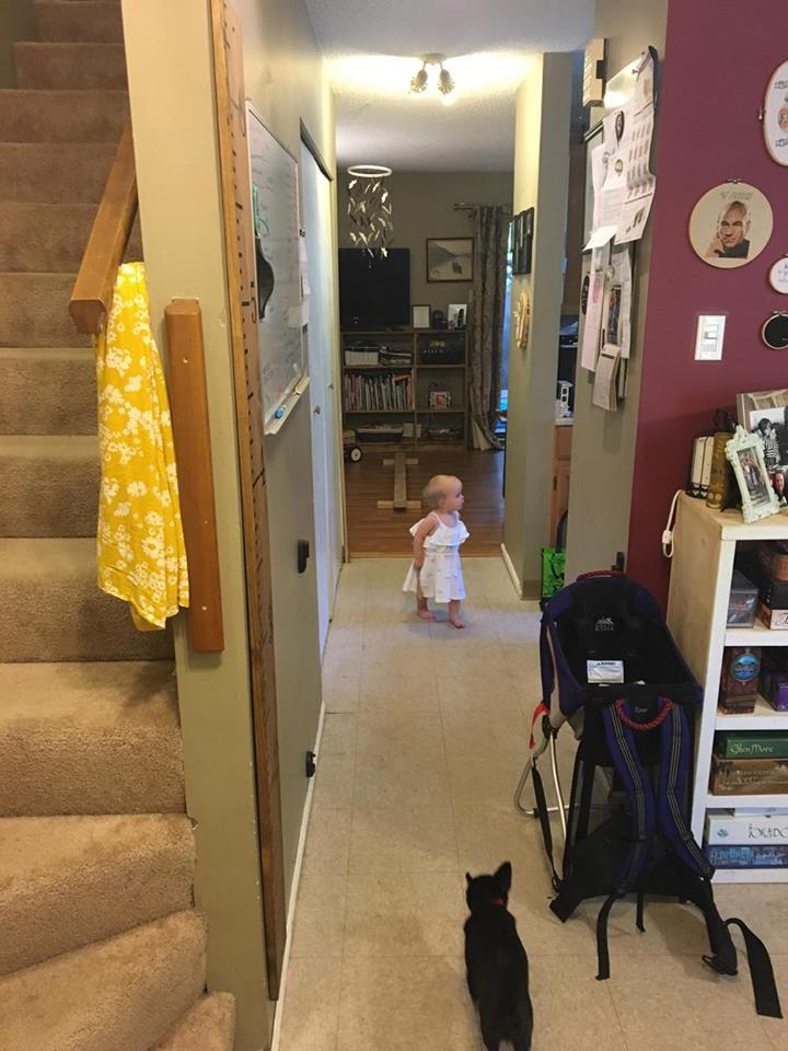 This is my view from the front door. Straight hallway (dining room has the board game shelf), tiny galley kitchen in the middle, and then living area in the back. Stairs up to the bedrooms and the one bathroom. (Yes, that is a tiny dog, and yes, the only space I have to store our hiking carrier is my hallway.) We're working on a hook and basket set up for Noora's shoes and coat under the whiteboard, but as you can see, we have a small space to work with.