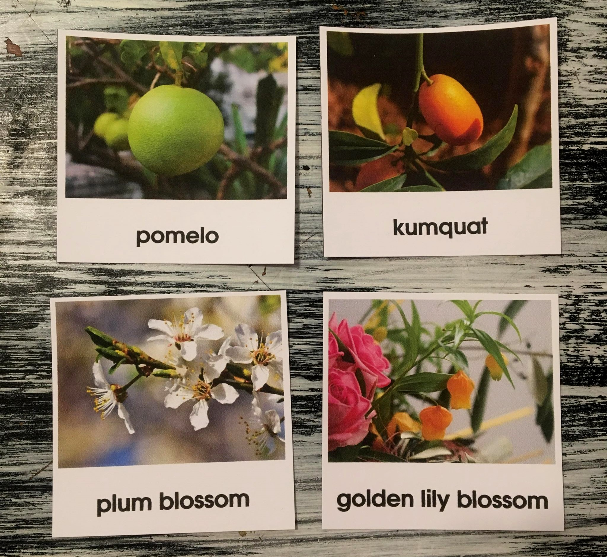 I love that there are so many cards that could really be used anytime. While all of the fruits and blossoms have significance at NY in particular, you could just have them for units on plants, food, China, etc., any time of year.