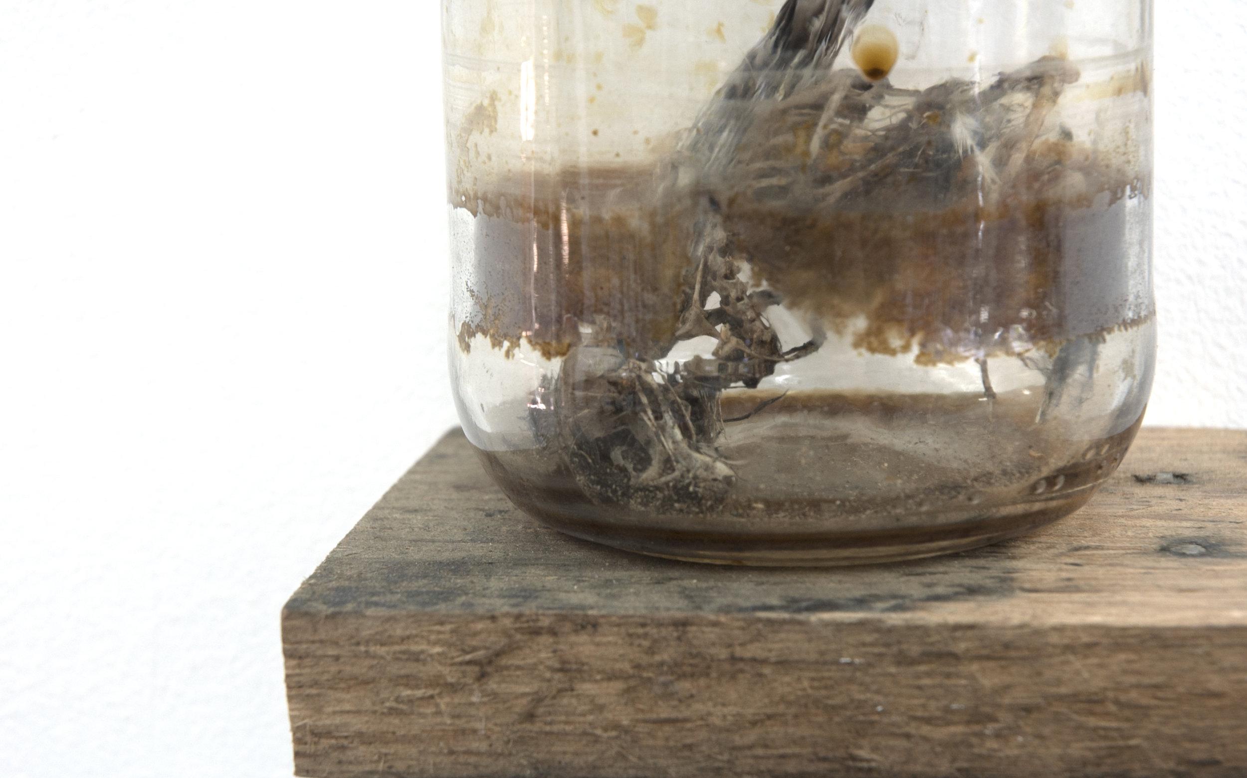 Bird in Jar
