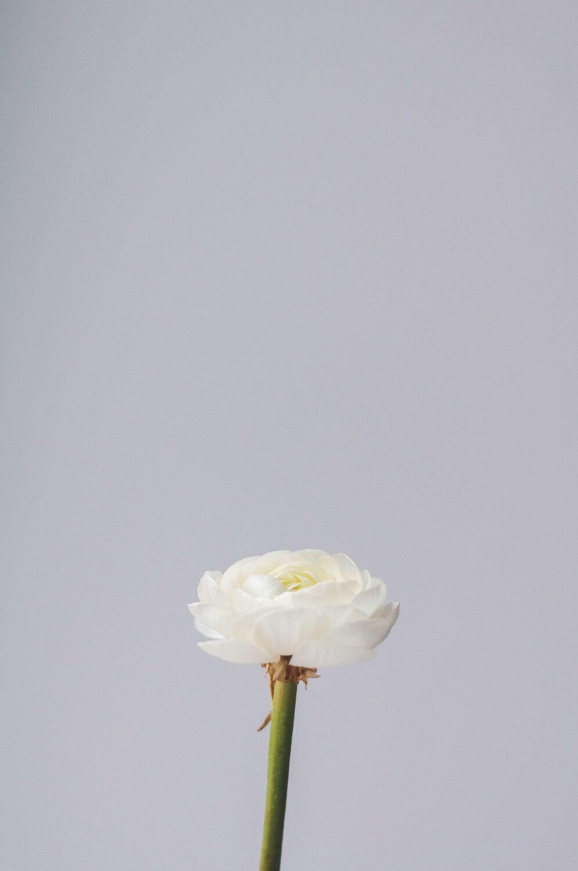white-flower-olia-gozha.jpg