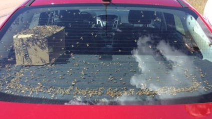 """'No! Not the bees! Not the bees!""""  Infestations lower the price of your junk car."""
