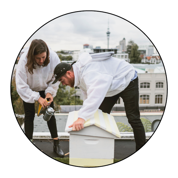 bees-hive-beehive-new zealand-auckland-honey-beekeeping-urban beekeeping-save the bees